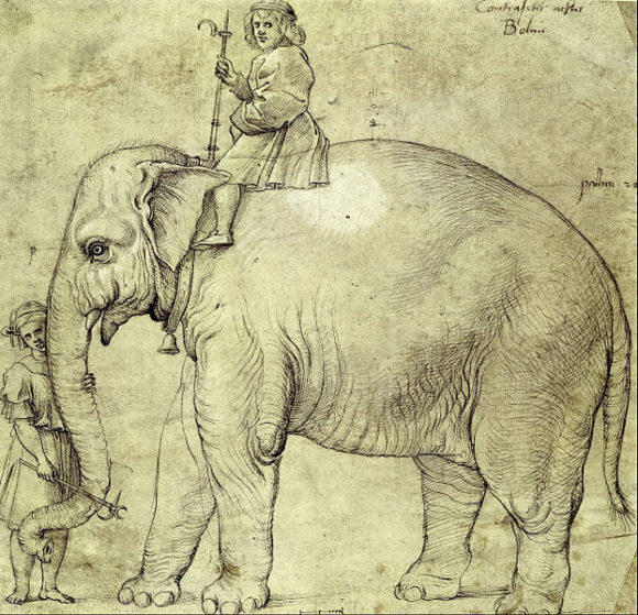 Szkic słonia Hanno wykonany przez Rafaela